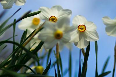 2011-04-03_Expo-Camelie-Locarno_0204