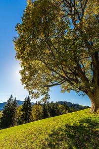 2014-10-31-Appenzell-Zurich-53