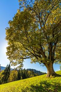 2014-10-31-Appenzell-Zurich-54