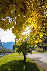 2015-10-24 Autumn in Valley Maggia-92