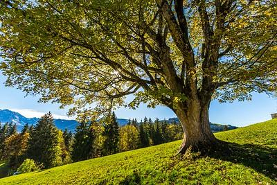2014-10-31-Appenzell-Zurich-60