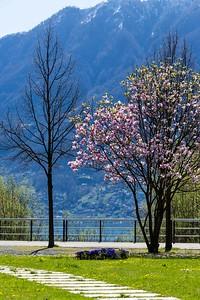 2013-04-14-Giro-di-Losone-Ascona-30