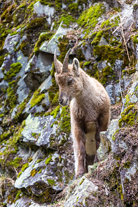 2017-04-16 Ibex Alpini 2-20