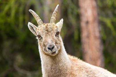2017-04-15 Ibex Alpini 1-63