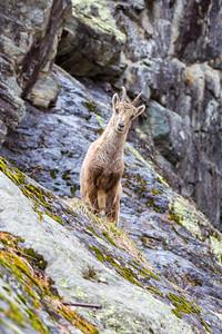 2017-04-16 Ibex Alpini 2-98