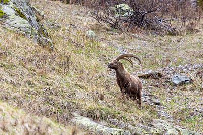 2017-04-16 Ibex Alpini 2-68