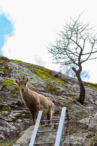 2017-04-16 Ibex Alpini 2-119