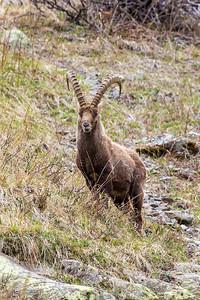 2017-04-16 Ibex Alpini 2-66