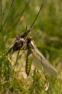 2011-05-22_Insects-Monte-Carasso_0126