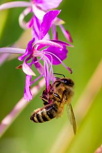 2015-08-10 Insectes Vallon Van-66