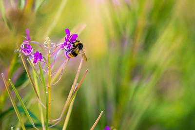 2015-08-10 Insectes Vallon Van-80