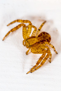 2014-08-22-Spider-at-Home-3