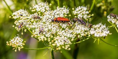 2015-08-04 Insectes du Van-6