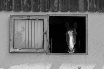 2011-07-07_Arenenberg_0029