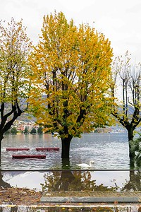 2014-11-13-Locarno-Flooded-118