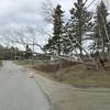 IA-storm-photos-tree-two-011416-LR