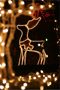 Another angle of fine bokeh and a little deer.