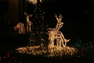 Pesky deer - running rampant.  At least there's no George Clooney this year!