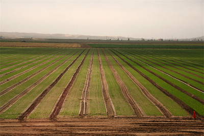 Hours of agriculture through the central valley of California.