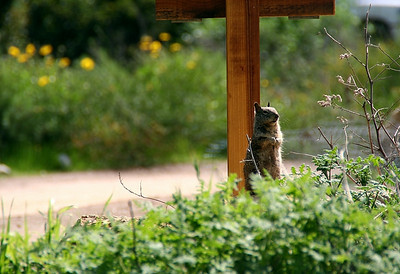 Guard on duty at the Nix Nature Center!