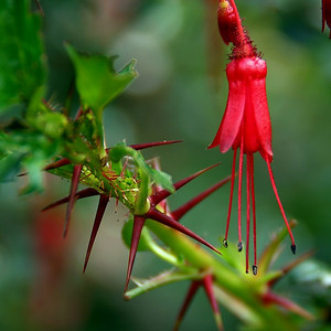I really like the contrast of the thorns and the blossom on this image.