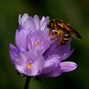 Even wasp hybrids want in on the springtime action!