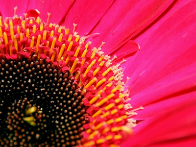 Close up, using an extension tube, of a flower in an arrangement.