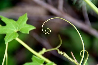 Loose spirals.