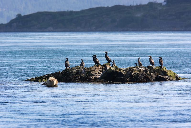 Common Seal.