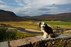 Buddy at Mar lodge Braemar Scotland.