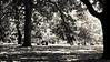 Oak lawn, Melbourne Royal Botanic Gardens, Melbourne Victoria.