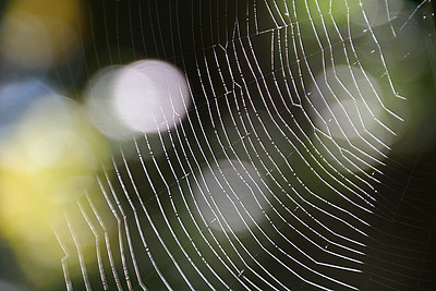 Morning spider web abstracts.