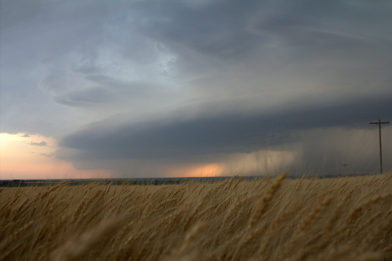 7:12 pm | Rural Dewey County, OK<br /> <br /> Wheat stalk point-of-view of this developing mothership.