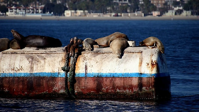 Even sealions were having a lazy Sunday afternoon!
