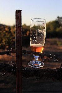 Sunset beer on next season's grave vines.