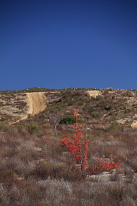 Fall foilage in the high desert.