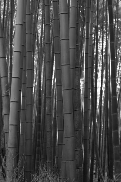 The bamboo grove at Arashiyama, Kyoto.
