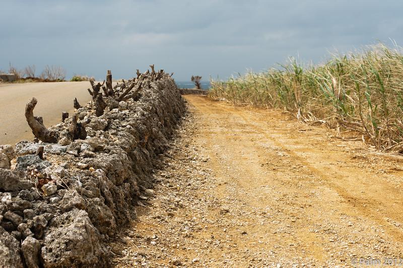 Sugar cane field, Kurimajima.