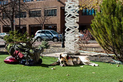 Dog resting in the sun outside Santa Fe public library, New Mexico.
