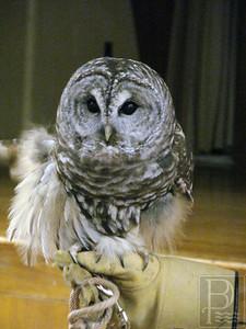 cp_p5_owls_byron_111413