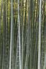 Bamboo grove, Kodai-ji Kyoto.