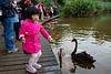 Feeding the water fowl