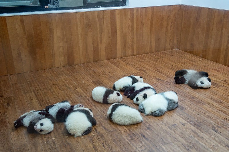 Nine baby pandas bred on the base