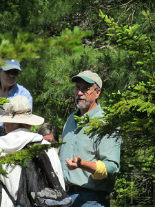 WP Geology GFields in pines 070314 TS