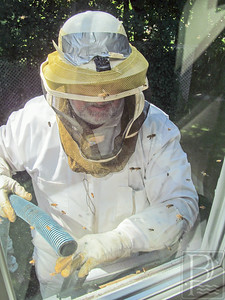 IA Bees Cowin_Vacuum 082814 TS