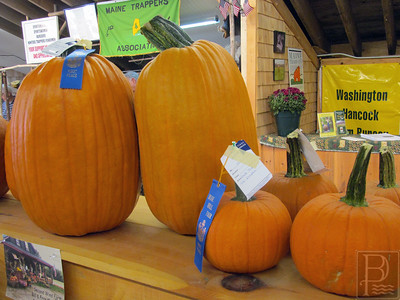 CM BHF Pumpkins 091114 AB
