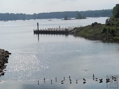 WP Gulls Mill Stream Longshot 091114 AB