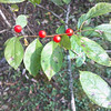 CP Outside Insights Alder Berries 101614 PC