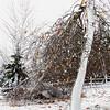 CP storm photos broken tree 110614 RW
