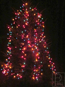 CP Penob Tree Light Tree 121114 TS